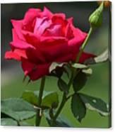 Rose Of Romance Canvas Print