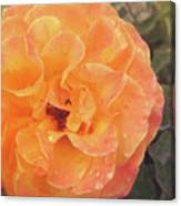 Rose Of Seville Canvas Print