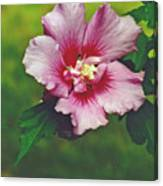 Rose Of Sharon Blossom Canvas Print