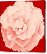 Rose On Red Canvas Print
