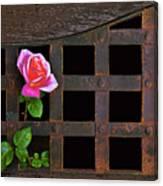 Rose On Trellis Canvas Print