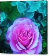 Rose Petal Perfection Canvas Print