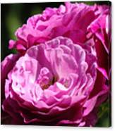 Rose Pink Purple Roses Flowers 1 Rose Garden Sunlit Flowers Baslee Troutman Canvas Print