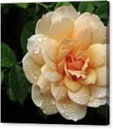 Rose Rain Canvas Print