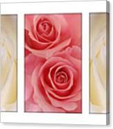 Rose Series  Canvas Print