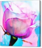 Rose Soft Pink Silked In Thick Paint Canvas Print