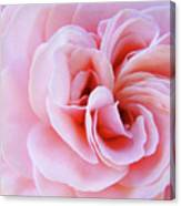 Rose Spiral Art Pink Roses Floral Baslee Troutman Canvas Print