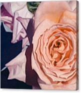 Rose Splendour Canvas Print