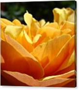 Rose Sunlit Orange Rose Garden 7 Rose Giclee Art Prints Baslee Troutman Canvas Print