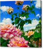 Rose To The Sky Canvas Print
