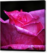 Rose Tryptich Canvas Print