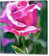 Rose Violet Bud Canvas Print