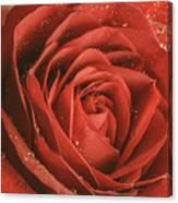 Rose Waiting In The Rain Canvas Print