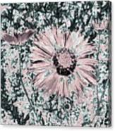 Rose Wine Daisies Canvas Print