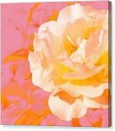 Rose With Pink Background Canvas Print
