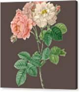 Rose155 Canvas Print