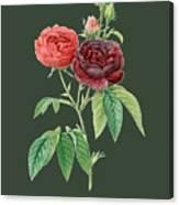Rose64 Canvas Print