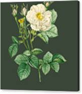 Rose81 Canvas Print