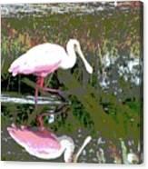 Roseate Spoonbill II Canvas Print