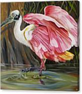 Roseate Spoonbill In A Cypress Swamp Canvas Print