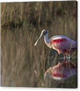 Roseate Spoonbill In Morning Light Canvas Print