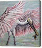 Roseate Spoonbill On The Foggy Laguna Madre Canvas Print