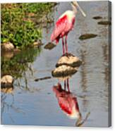 Roseate Spoonbill Reflections Canvas Print