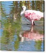 Roseate Spoonbill Young Adult Canvas Print