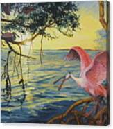 Roseate Spoonbills Among The Mangroves Canvas Print