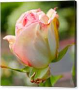 Rosebud Pale Pink Canvas Print