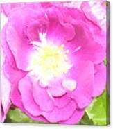 Rosegarden No. 24 Canvas Print