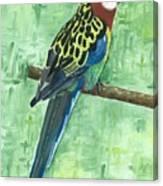 Rosella Canvas Print