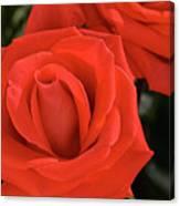 Roses-5814 Canvas Print