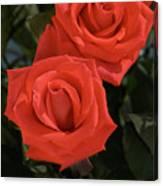 Roses-5840 Canvas Print
