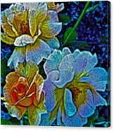 Roses Aglow Canvas Print
