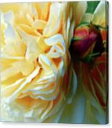 Roses And Bud Canvas Print