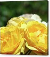 Roses Art Prints Canvas Sunlit Yellow Rose Flowers Baslee Troutman Canvas Print