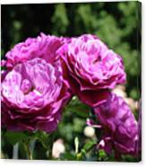Roses Art Rose Garden Pink Purple Floral Prints Baslee Troutman Canvas Print
