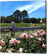 Roses At Rusack Vineyards Canvas Print