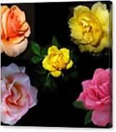 Roses Beautiful Canvas Print