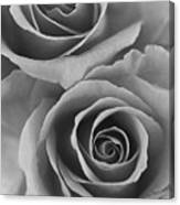 Roses Black And White Canvas Print