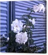 Roses De Lignes Bleues Canvas Print