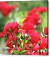 Roses Garden Spring Scene Canvas Print