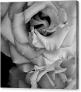 Roses In Black And White Canvas Print