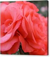 Roses In Dark Pink I Canvas Print