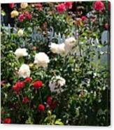 Roses In Red And White Canvas Print