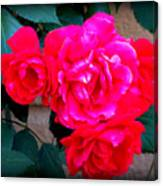 Roses On Stucco Canvas Print