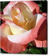 Roses Pink Creamy White Rose Garden 5 Fine Art Prints Baslee Troutman Canvas Print
