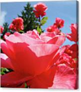 Roses Pink Rose Landscape Summer Blue Sky Art Prints Baslee Troutman Canvas Print