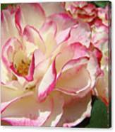 Roses Pink White Rose Flowers 4 Rose Garden Artwork Baslee Troutman Canvas Print